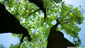 green_trees_3-wallpaper-1024x576